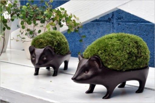 ハリネズミ盆栽