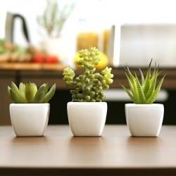 光触媒観葉植物 サーキュレントプランツ