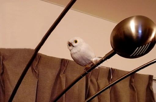 PUEBCO Artificial Birds プエブコ アーティフィシャルバード