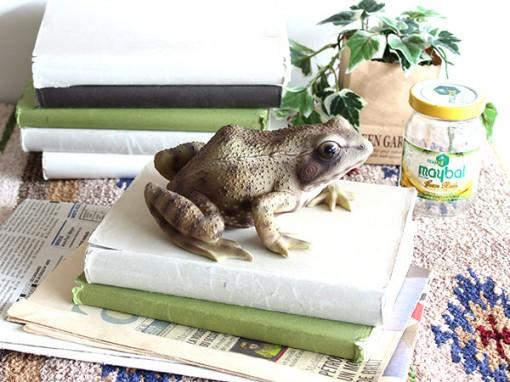 PET BANK カエル