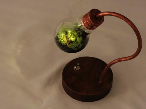 bulb terrarium