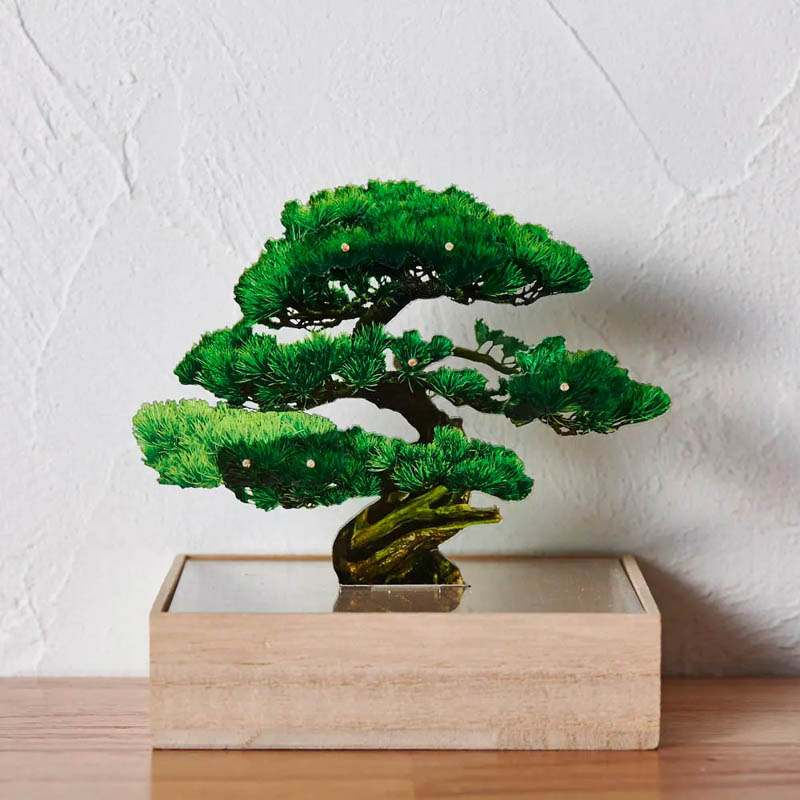 mini bonsai 松