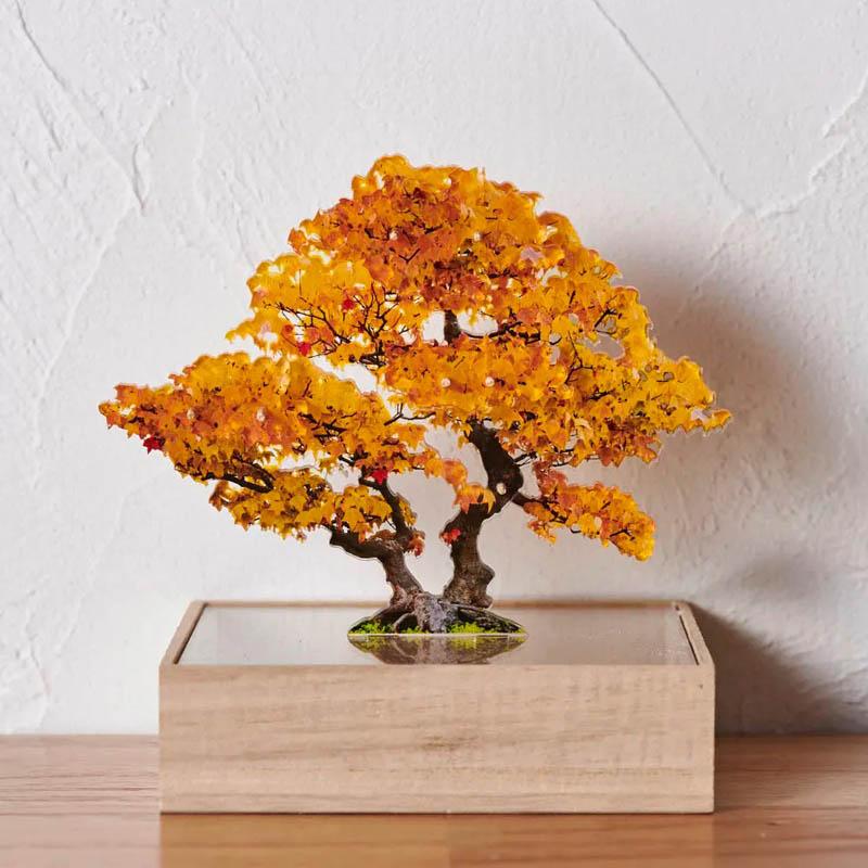 mini bonsai いちょう