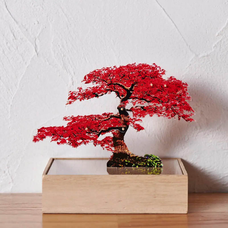 mini bonsai もみじ